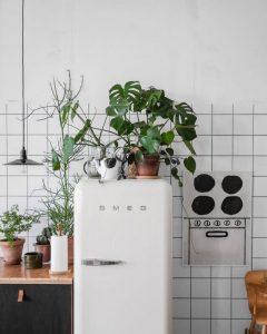 plante frigo