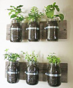 pot plante comestible